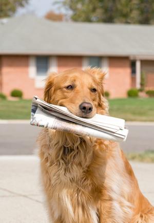 hund zeitung